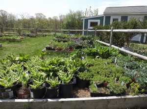 Holding bed at the Senior Center-ready for the plant sale.