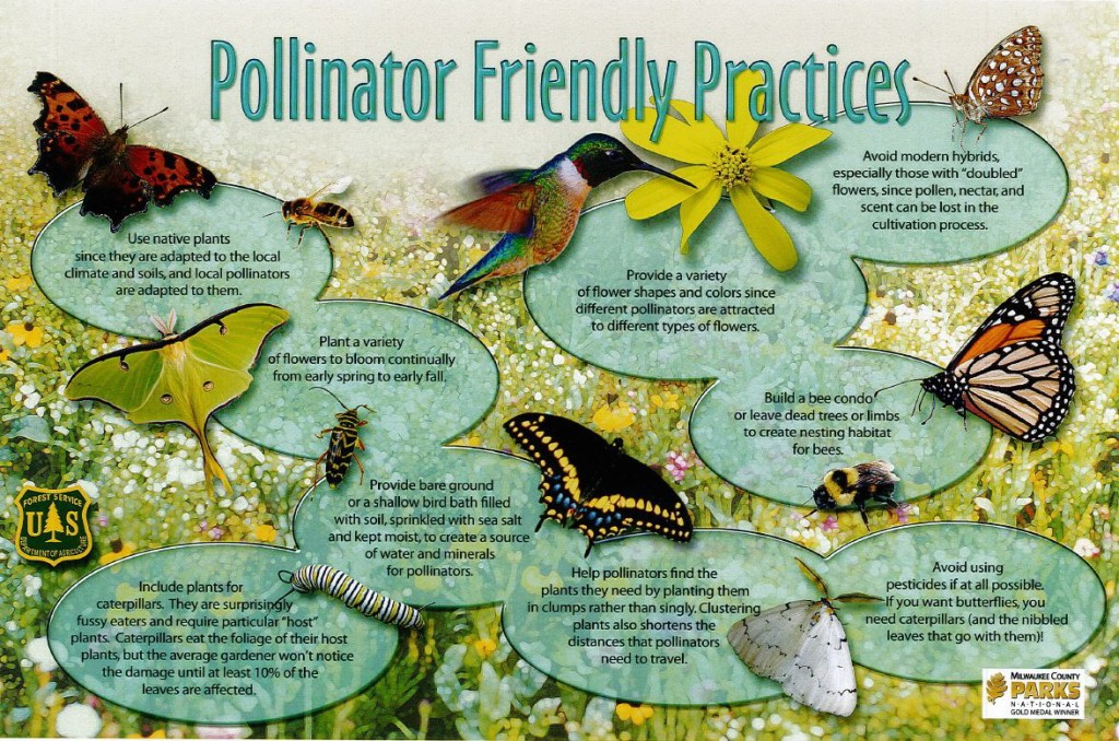 Community Garden Ideas find this pin and more on community garden ideas Plant For Pollinators They Provide Ecological Services Essential To The Health Of Our Environment And They Add Beauty And Color To Your Garden